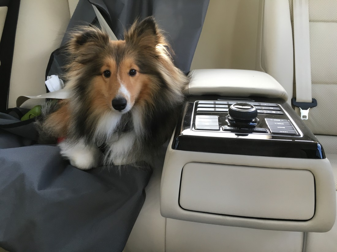 Lucy in Backseat
